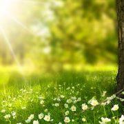 Naturboden